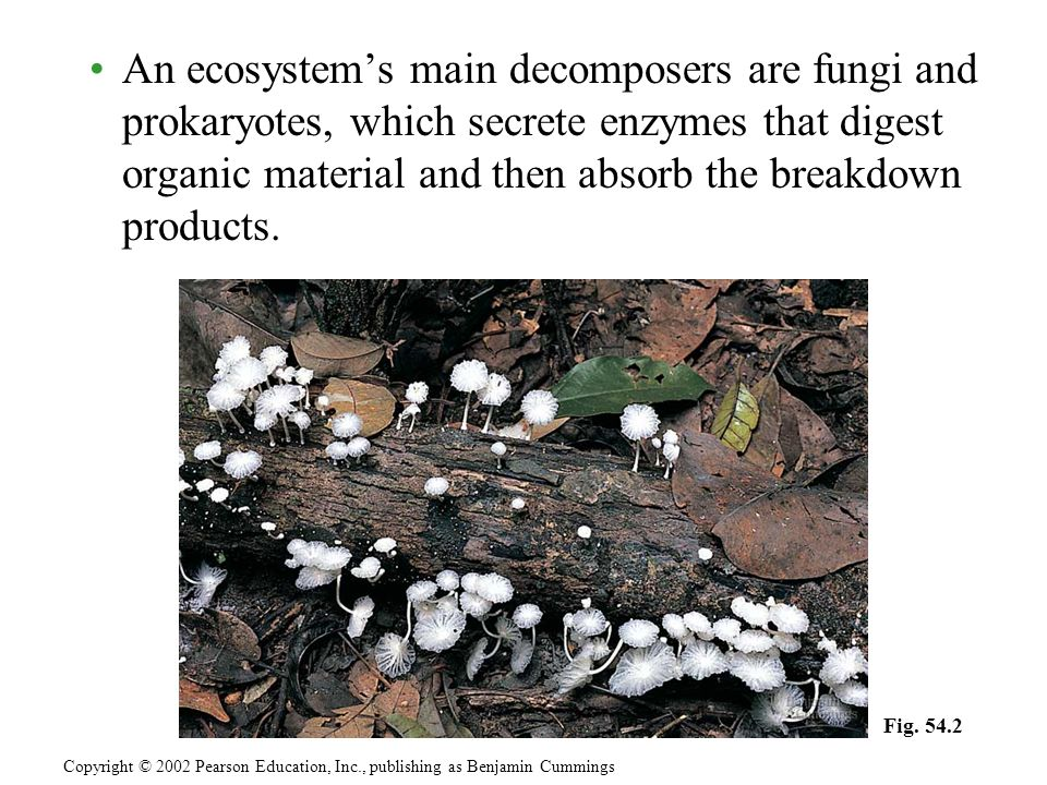 An ecosystem's main decomposers are fungi and prokaryotes, which secrete enzymes that digest organic material and then absorb the breakdown products.