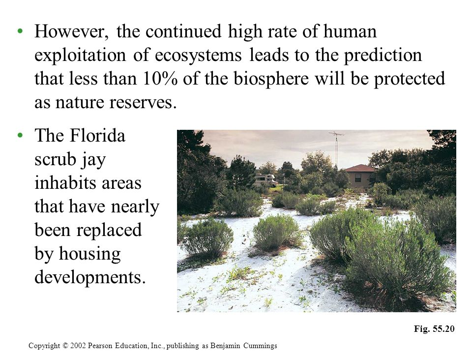 However, the continued high rate of human exploitation of ecosystems leads to the prediction that less than 10% of the biosphere will be protected as nature reserves.