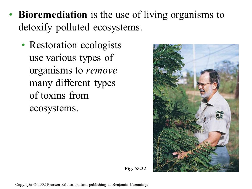 Bioremediation is the use of living organisms to detoxify polluted ecosystems.