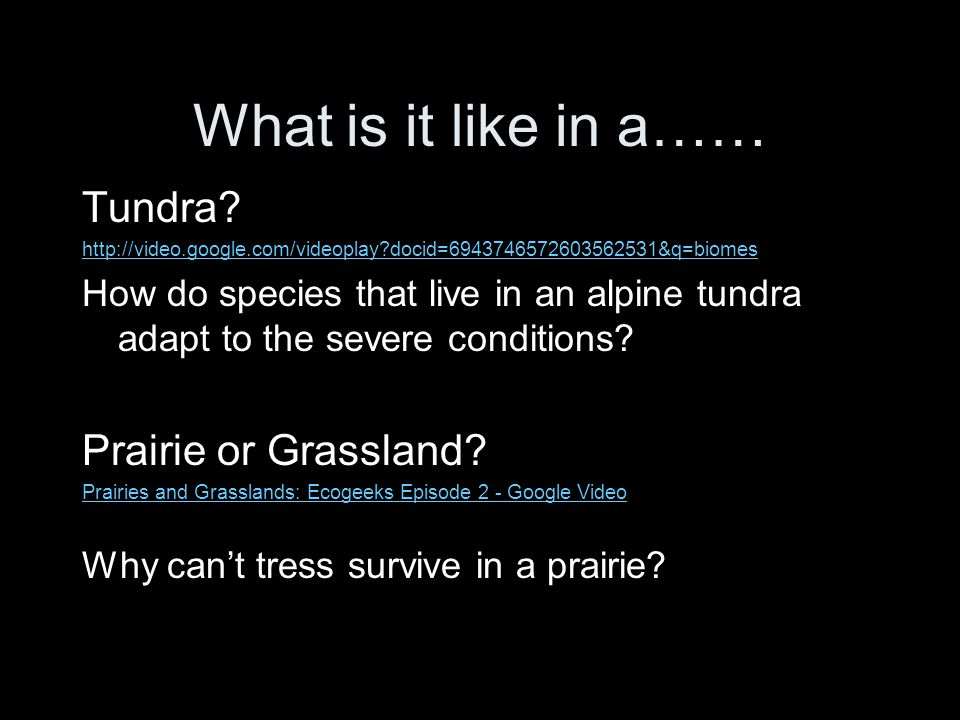 What is it like in a…… Tundra Prairie or Grassland