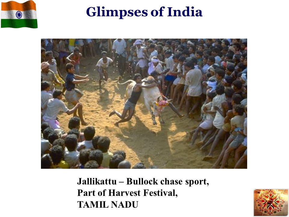Glimpses of India Jallikattu – Bullock chase sport,