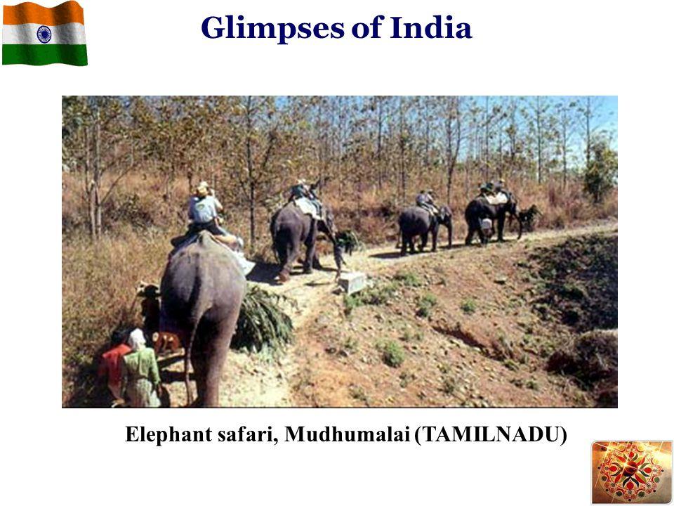 Glimpses of India Elephant safari, Mudhumalai (TAMILNADU)