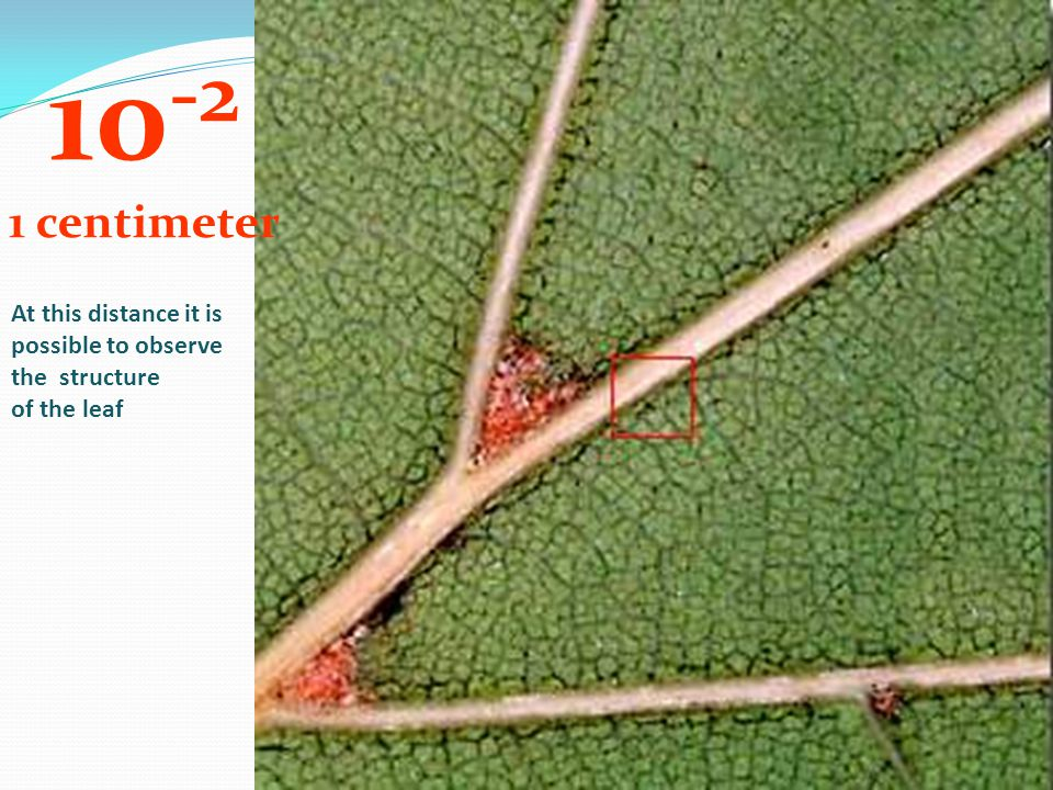 10-2 1 centimeter At this distance it is possible to observe the structure of the leaf
