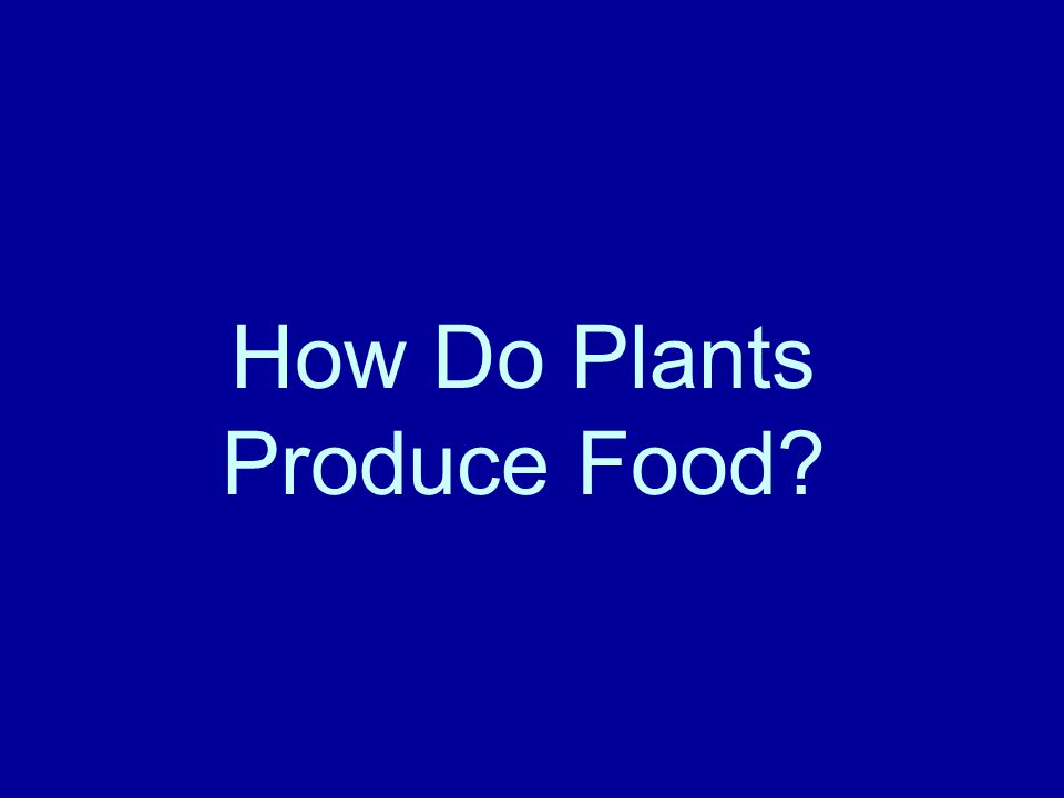 How Do Plants Produce Food