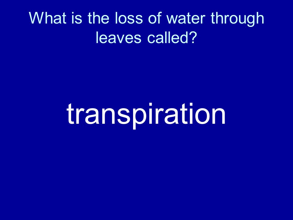 What is the loss of water through leaves called