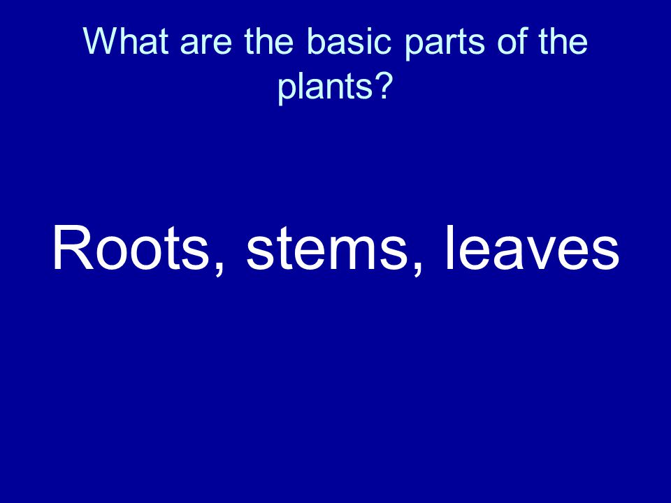 What are the basic parts of the plants