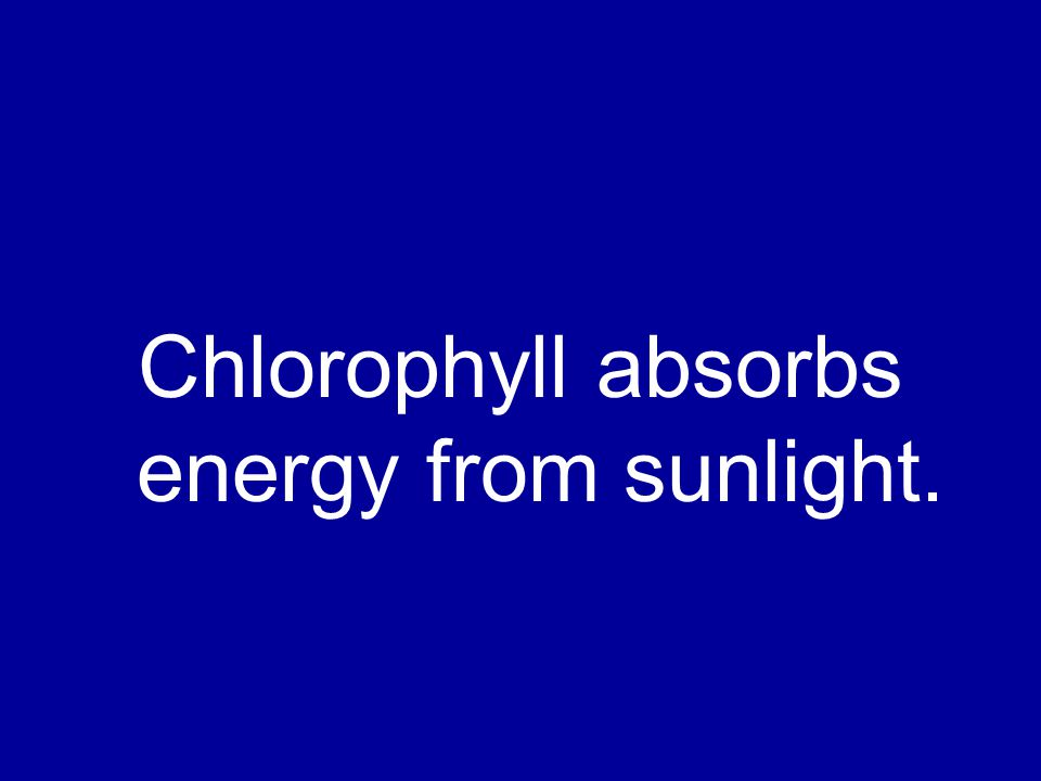 Chlorophyll absorbs energy from sunlight.
