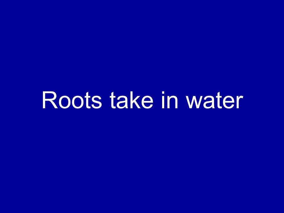 Roots take in water