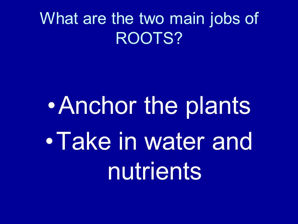 What are the two main jobs of ROOTS
