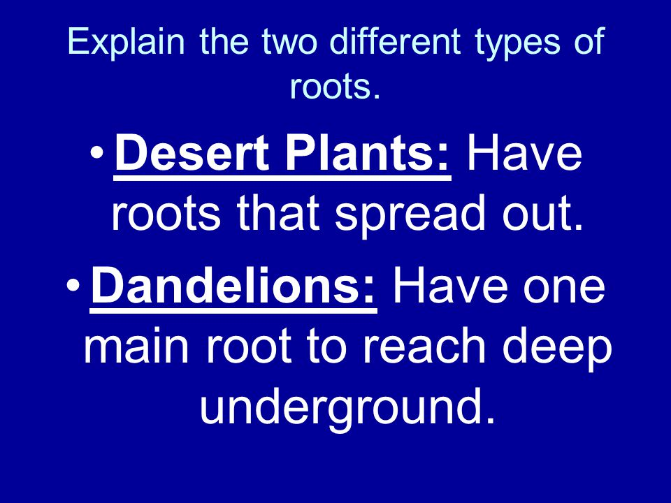 Explain the two different types of roots.