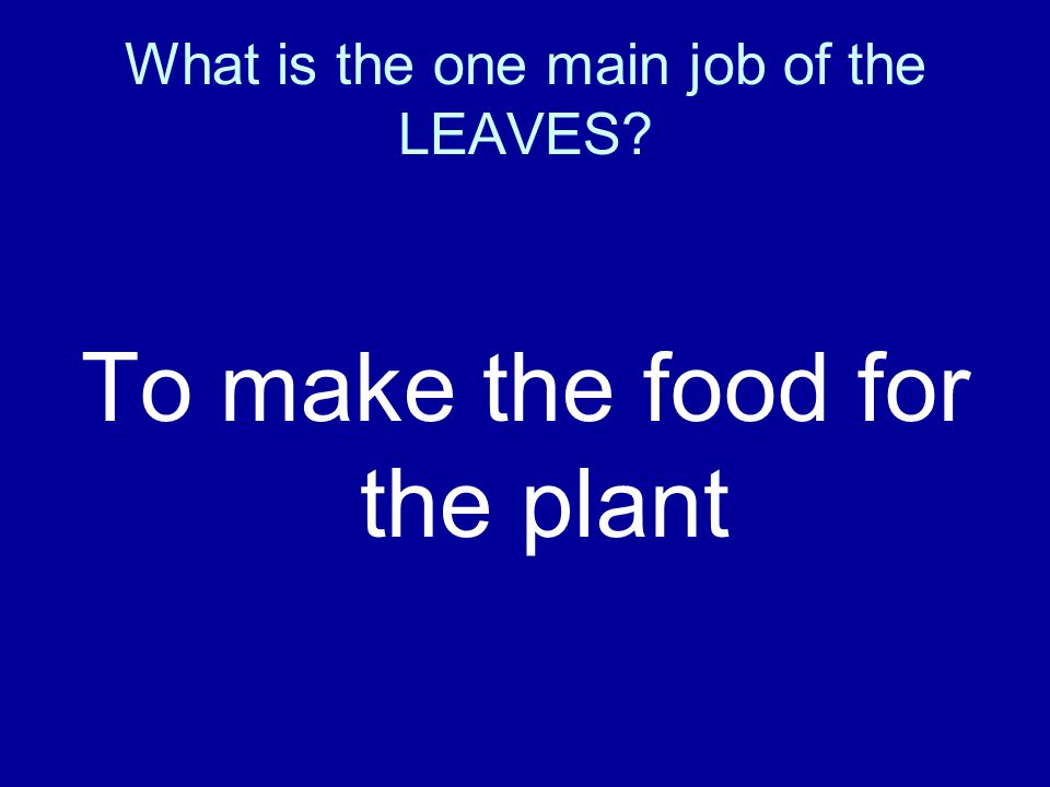 What is the one main job of the LEAVES