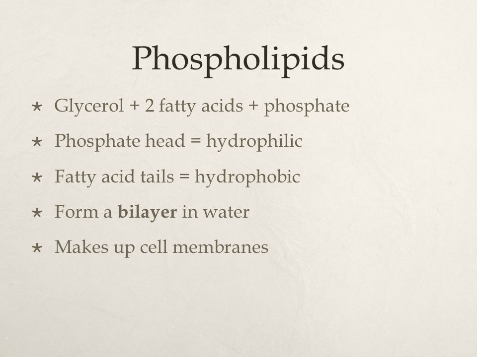 Phospholipids Glycerol + 2 fatty acids + phosphate