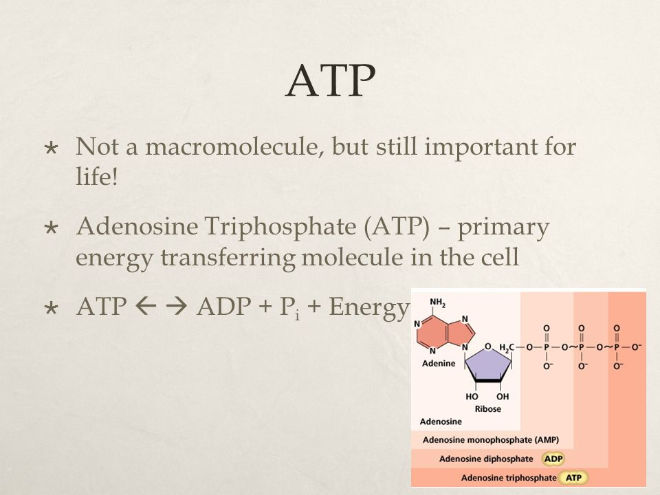 ATP Not a macromolecule, but still important for life!