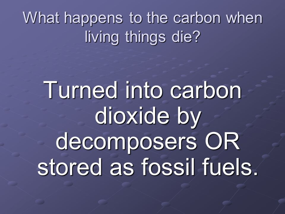 What happens to the carbon when living things die