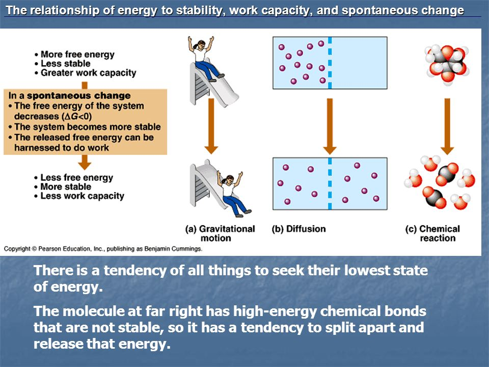 The relationship of energy to stability, work capacity, and spontaneous change