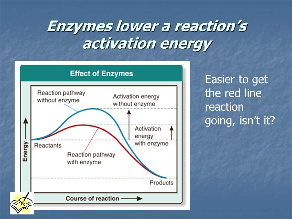 Enzymes lower a reaction's activation energy