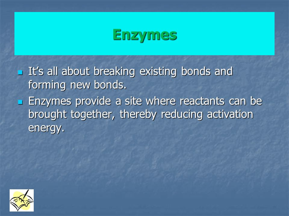 Enzymes It's all about breaking existing bonds and forming new bonds.
