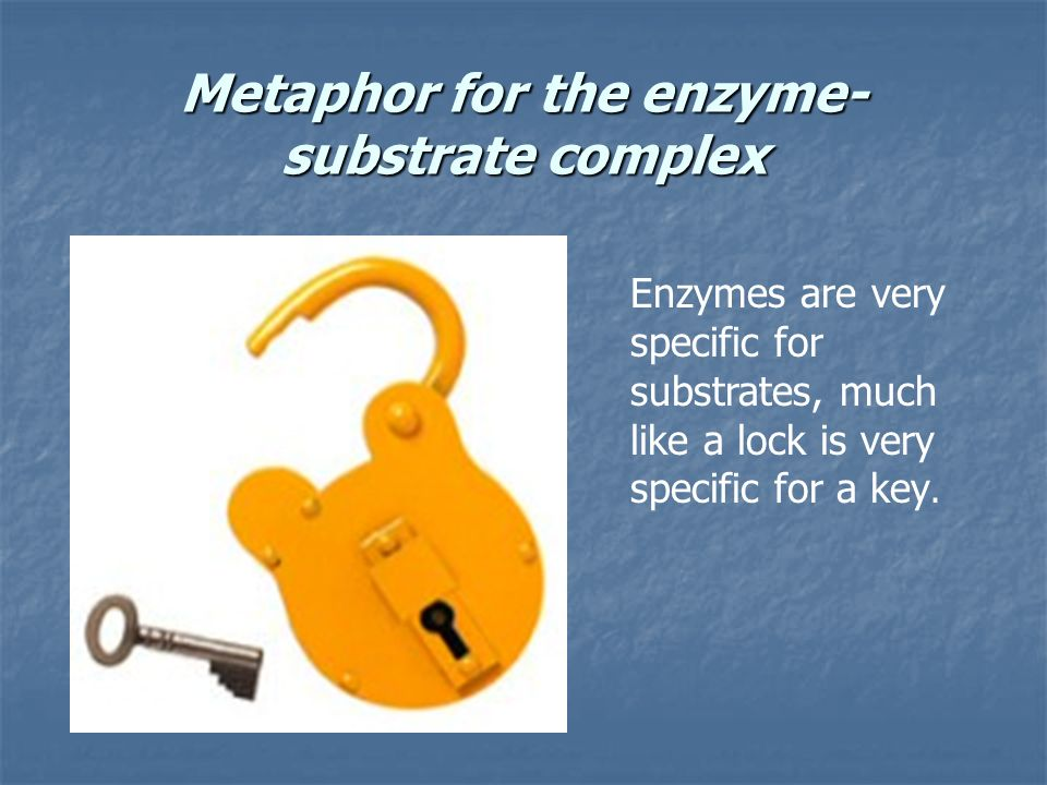 Metaphor for the enzyme-substrate complex