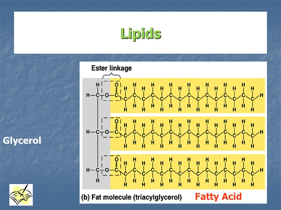 Lipids Glycerol Fatty Acid