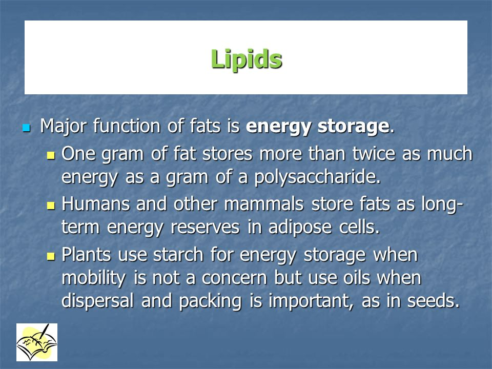 Lipids Major function of fats is energy storage.