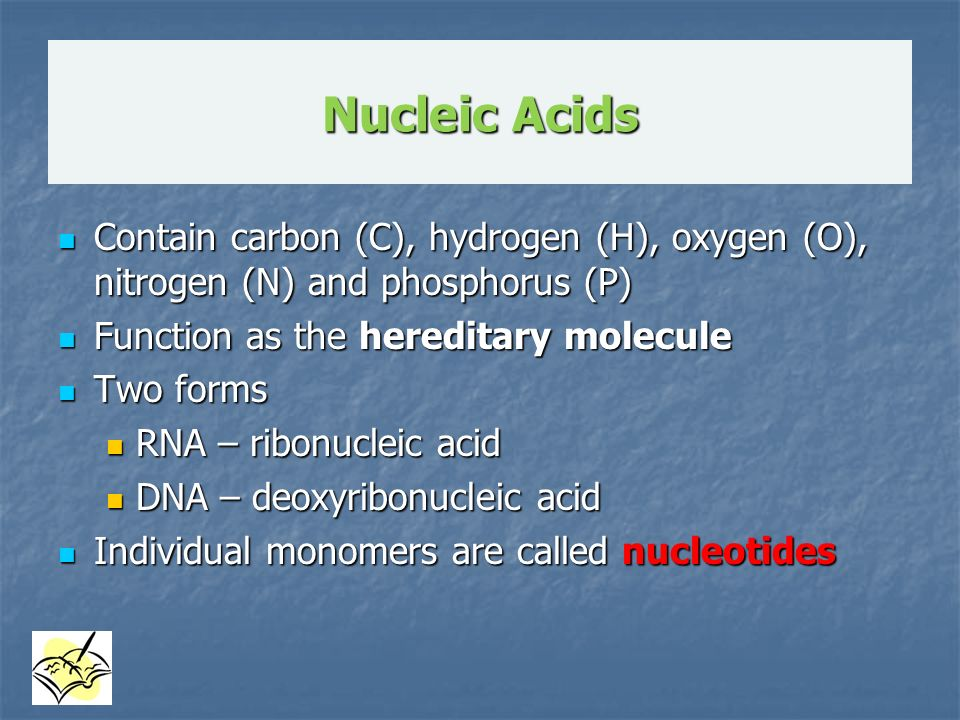 Nucleic Acids Contain carbon (C), hydrogen (H), oxygen (O), nitrogen (N) and phosphorus (P) Function as the hereditary molecule.
