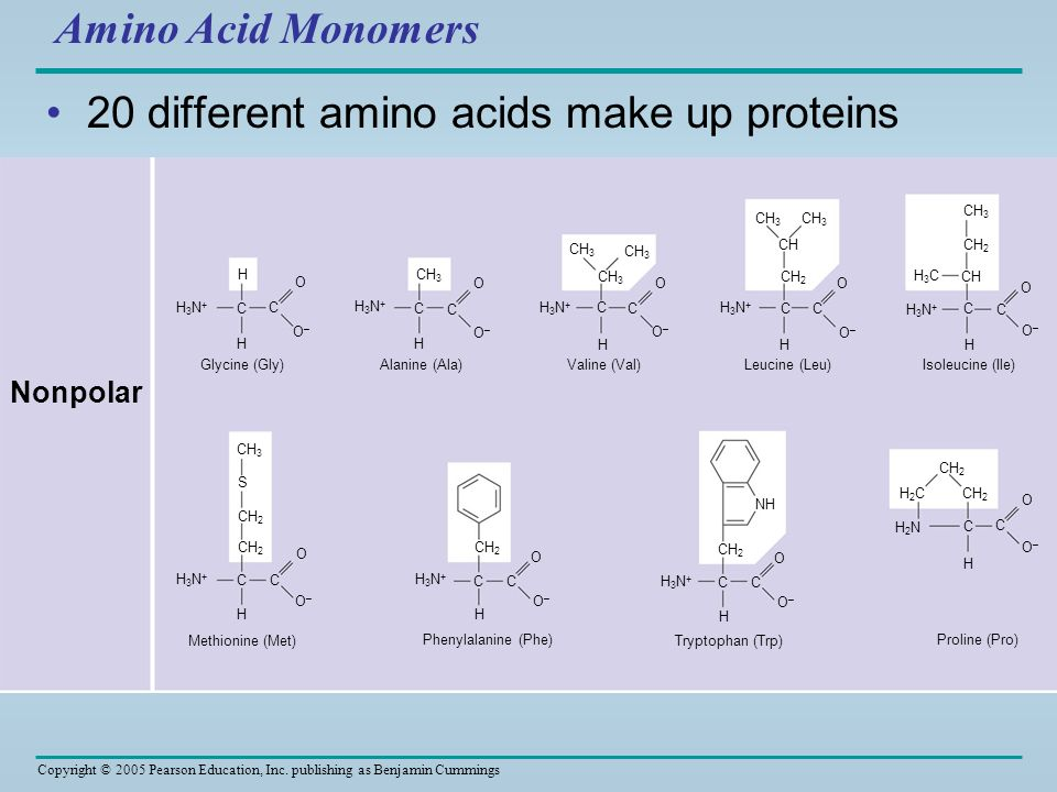 20 different amino acids make up proteins