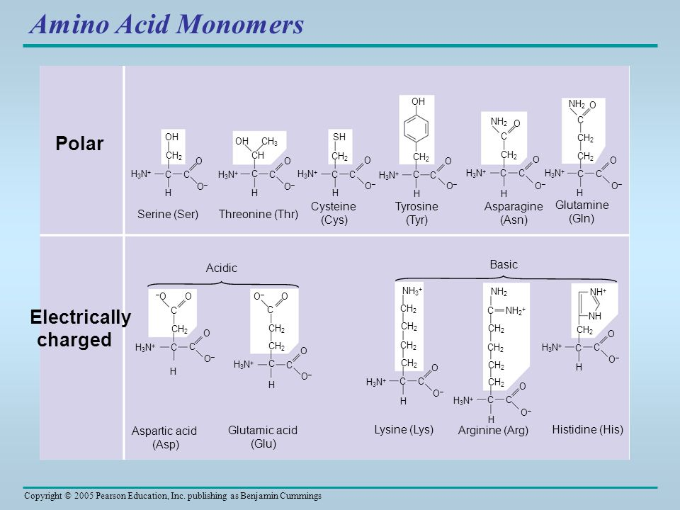 Amino Acid Monomers Polar Electrically charged Serine (Ser)