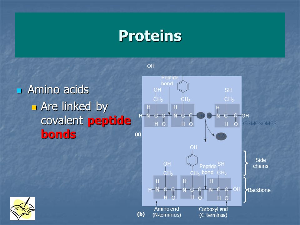 Proteins Amino acids Are linked by covalent peptide bonds OH