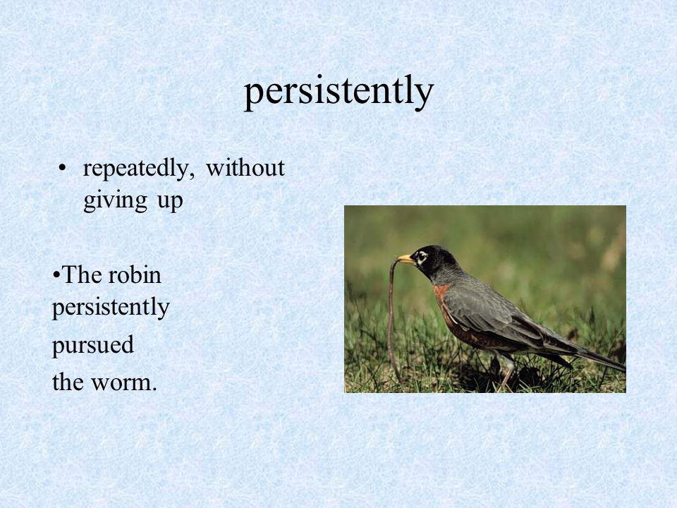 persistently repeatedly, without giving up The robin persistently