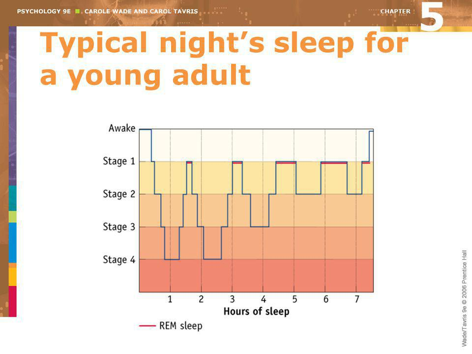 Typical night's sleep for a young adult