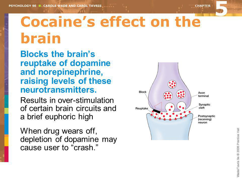 Cocaine's effect on the brain