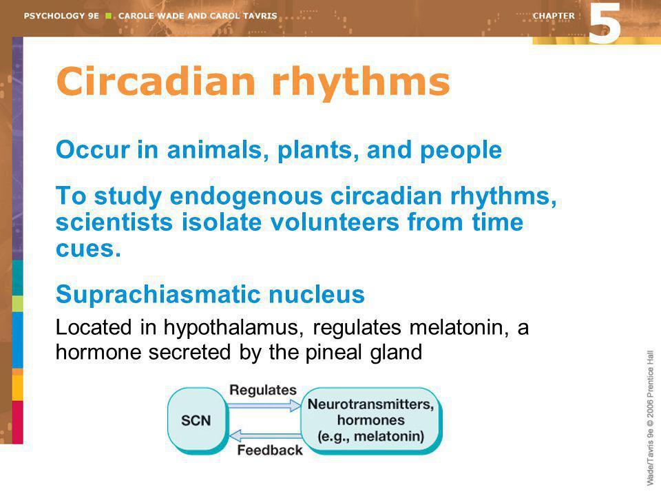 5 Circadian rhythms Occur in animals, plants, and people