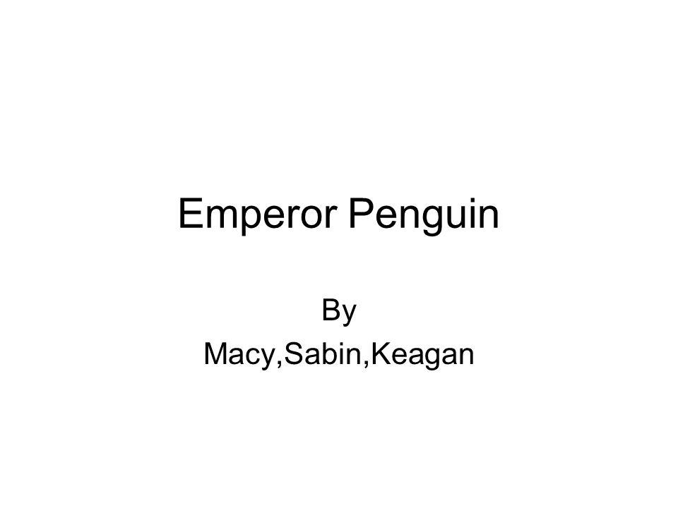Emperor Penguin By Macy,Sabin,Keagan