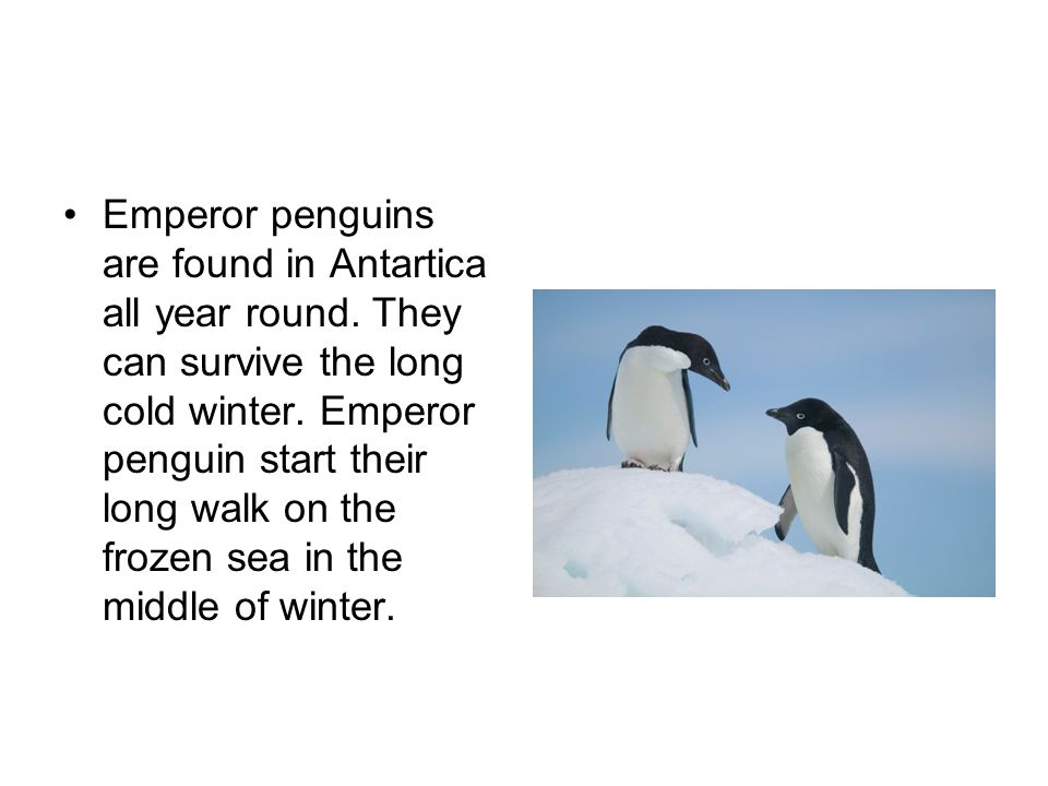 Emperor penguins are found in Antartica all year round