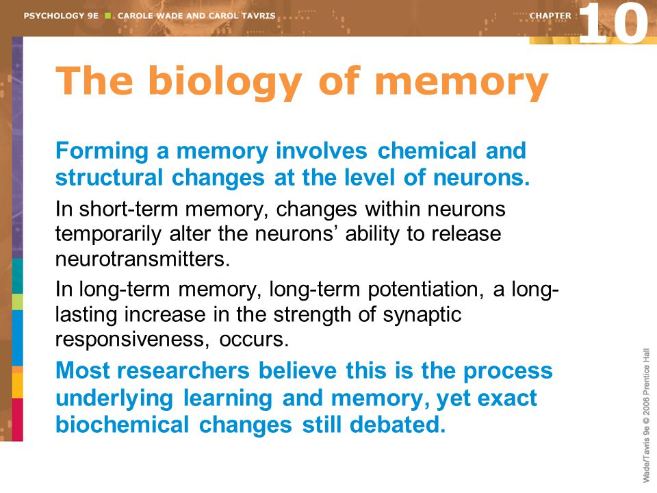 10 The biology of memory. Forming a memory involves chemical and structural changes at the level of neurons.