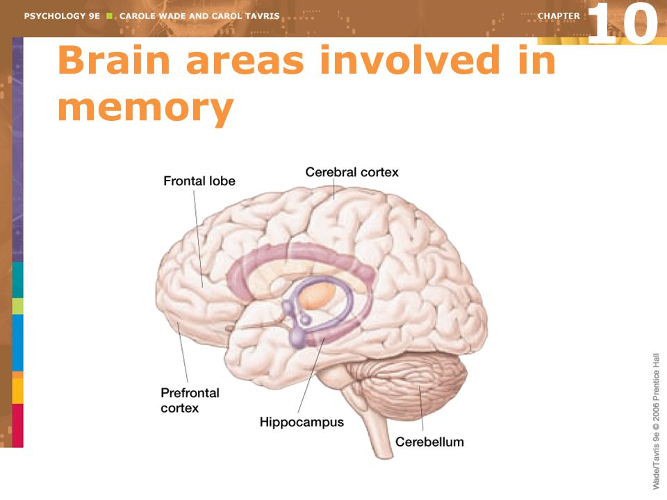 Brain areas involved in memory