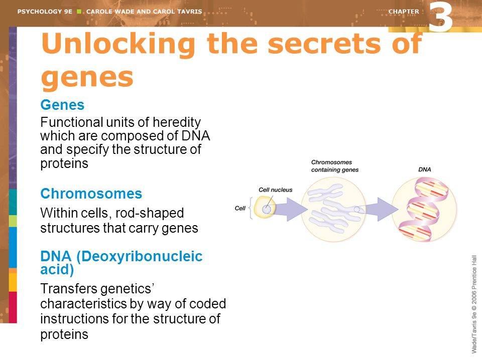 Unlocking the secrets of genes