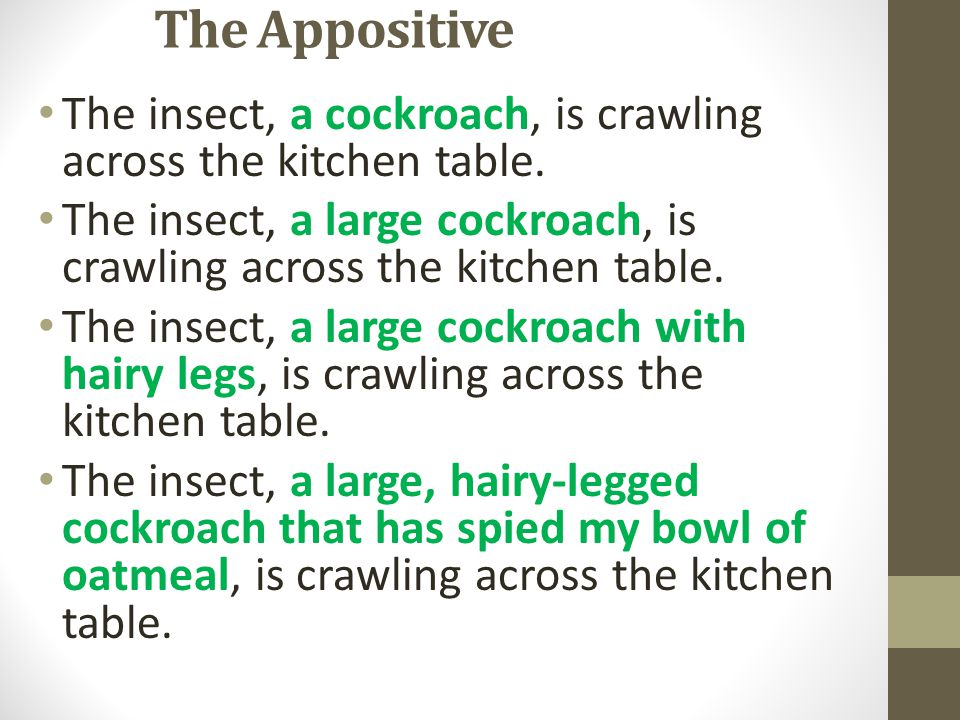 The Appositive The insect, a cockroach, is crawling across the kitchen table. The insect, a large cockroach, is crawling across the kitchen table.