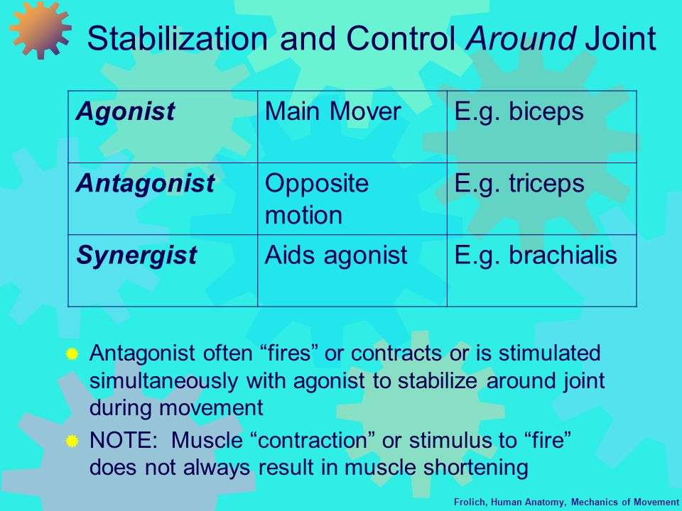 Stabilization and Control Around Joint