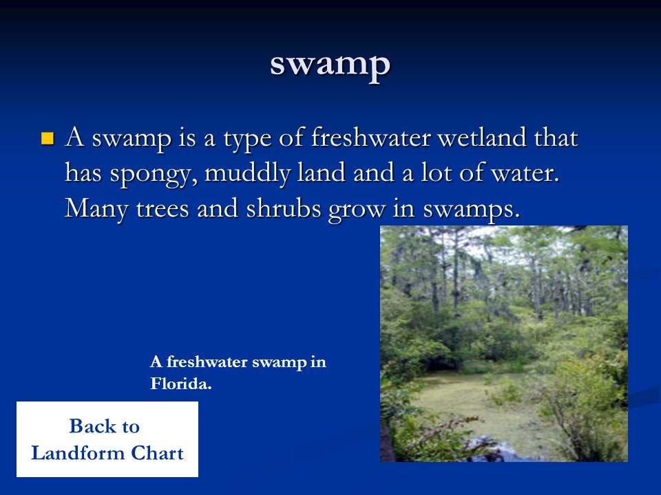 swamp A swamp is a type of freshwater wetland that has spongy, muddly land and a lot of water. Many trees and shrubs grow in swamps.