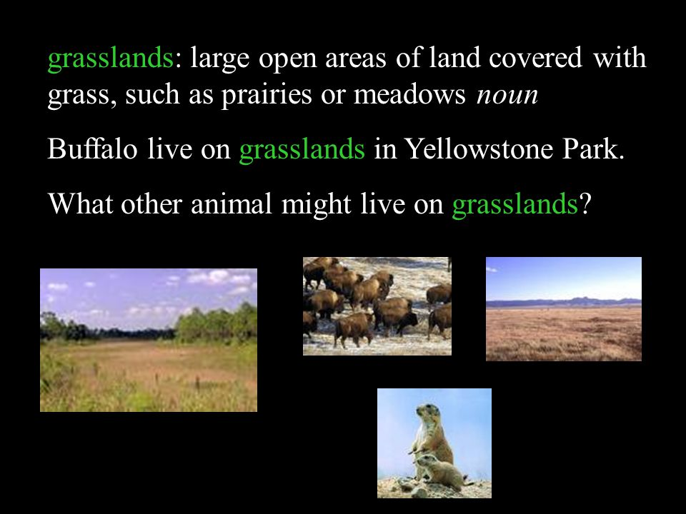 grasslands: large open areas of land covered with grass, such as prairies or meadows noun