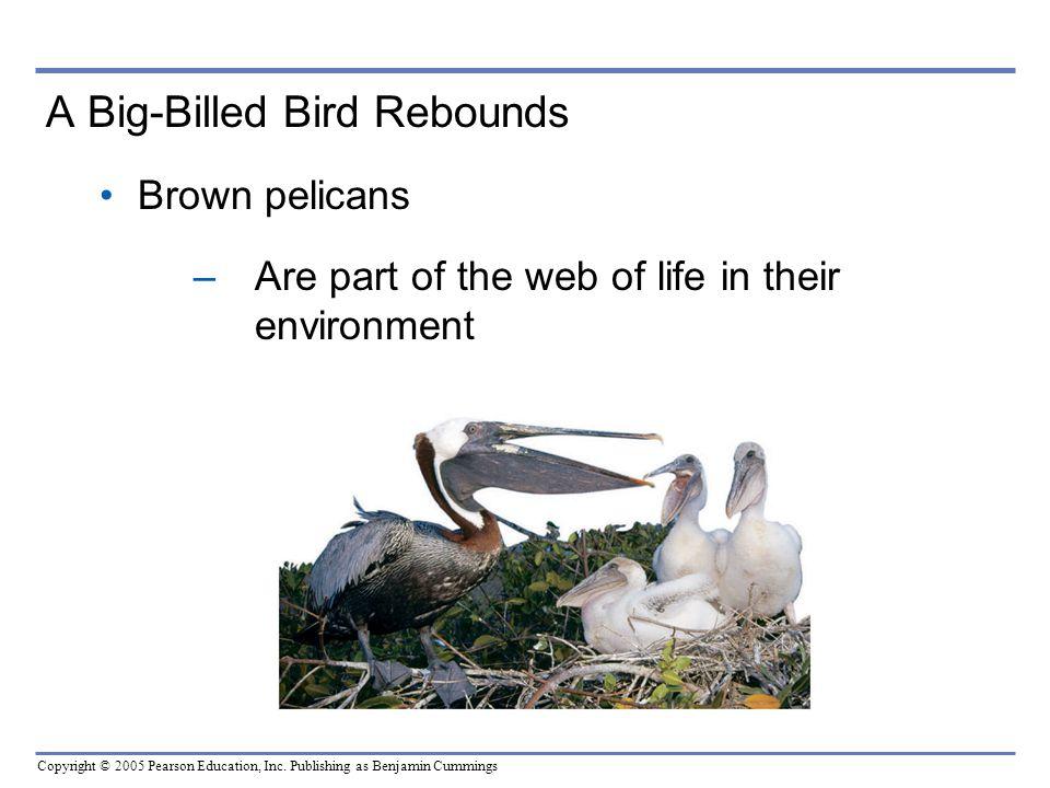 A Big-Billed Bird Rebounds