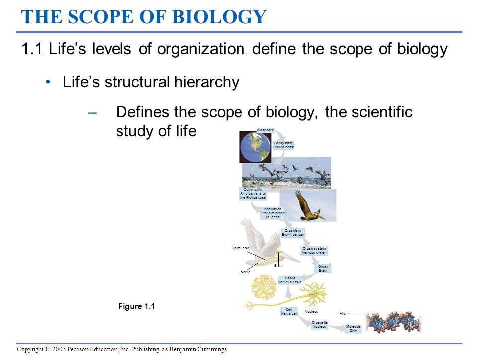essay on scope of biology Medical progresss have significantly improved human life conditions pharmaceutical merchandises such as drugs, antibiotics, vaccinums and the singular betterments in medical specialty and surgery provide effectual interventions and defense mechanism against a huge figure of diseases.