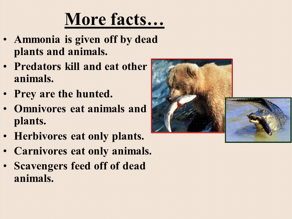 More facts… Ammonia is given off by dead plants and animals.