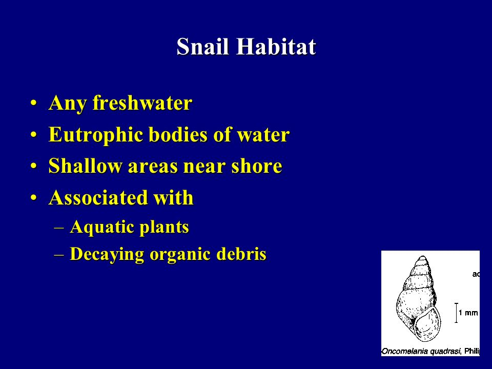 Snail Habitat Any freshwater Eutrophic bodies of water