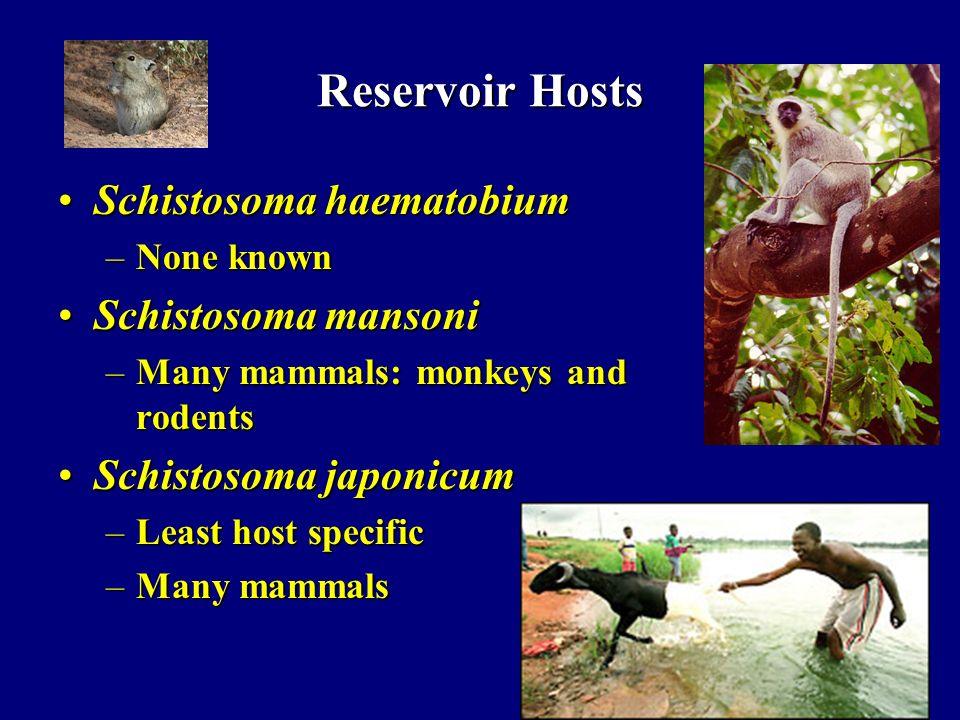 Reservoir Hosts Schistosoma haematobium Schistosoma mansoni