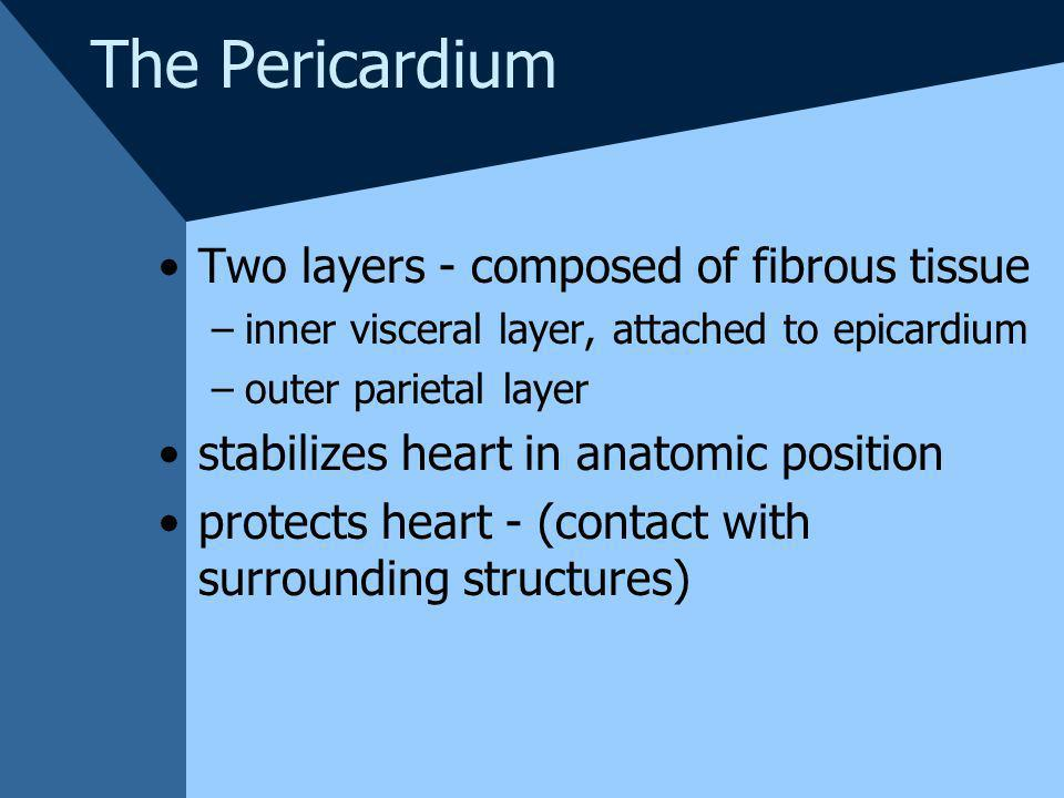 The Pericardium Two layers - composed of fibrous tissue