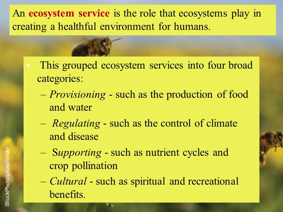 An ecosystem service is the role that ecosystems play in creating a healthful environment for humans.