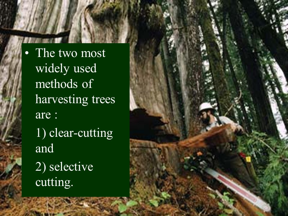 The two most widely used methods of harvesting trees are :
