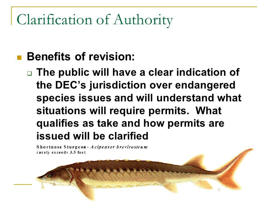 Clarification of Authority